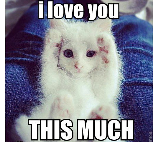 Image result for cat love memes