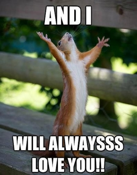 Funny Squirrel will always love you cute love memes for him and for her love dignity