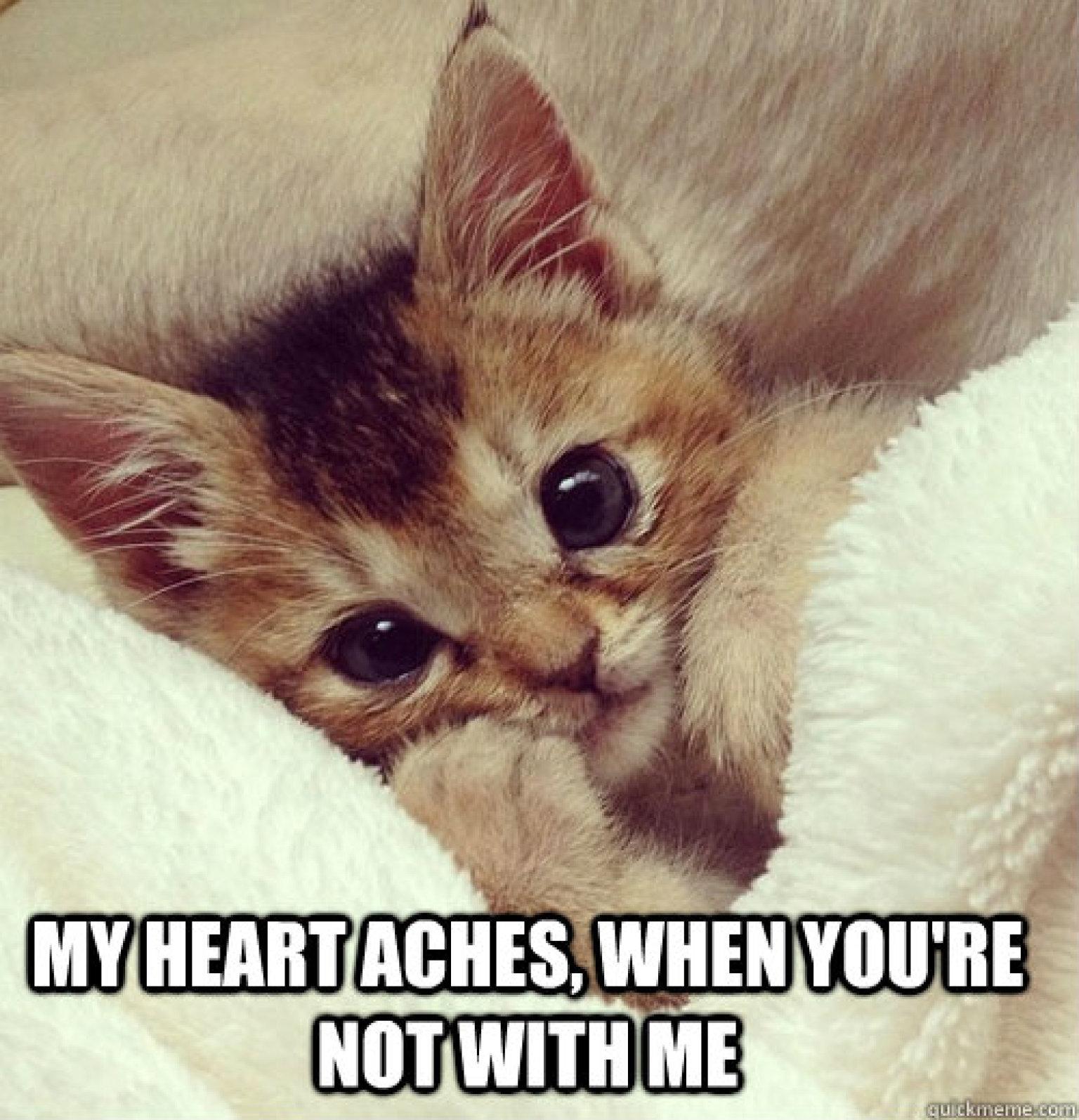 Tumblr N2jzcmCOkf1rwd7gfo1 250 O CAT MEME Facebook