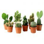 Cactus Plant gift idea for him